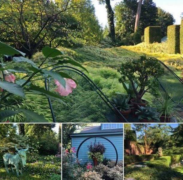 Mountsier Hardie Garden 2019 Sept from Farmers Market.JPG