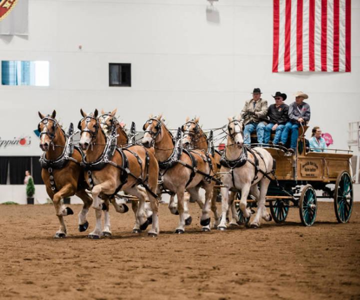 morrisvillestatecoll-6-horse-driving-team.JPG