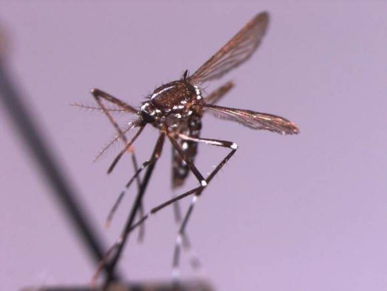 DEP Reminds Residents To Eliminate Standing Water on Properties To Reduce Mosquito Population