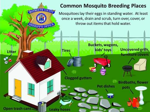 Top story 5f17879421a884875bb3 monmouthcountysheriffmosquitos