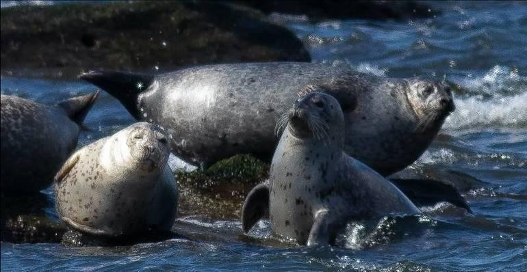multiple seals.jpg