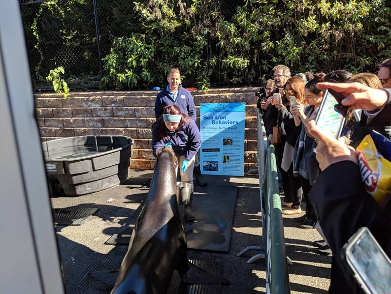 Turtle Back Zoo, Dyson the Sea Lion, West Orange Chamber of Commerce
