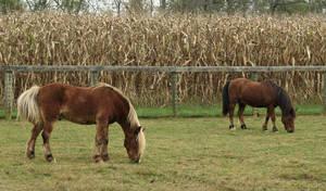 Carousel image 418557a98a4cfdd2c5d7 mylestone equine rescue 17006