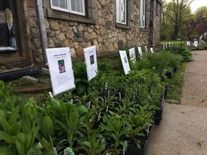 Lake Foundation Holds In-Person Sale of Native Plants