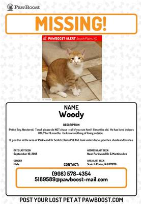 Carousel image ad545e40a09340d5ebd4 newest woody   lost cat  2