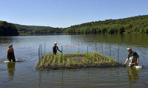 Carousel image 318c388296fd3cf4b00b nick decker pa state parks resource manager and cory speroff and katie walston of princeton hydro position a floating island of native plants in the lake at frances slocum state park