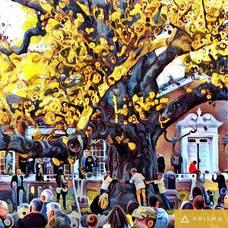 Basking Ridge historic oak tree