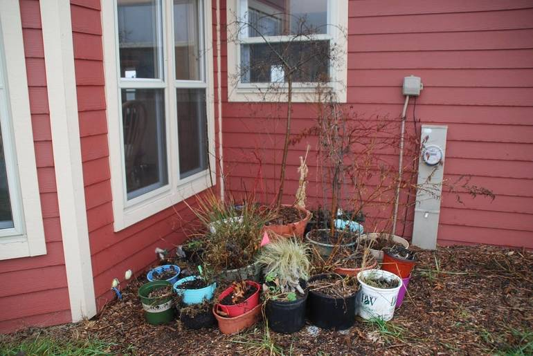 Winter Care for Trees, Shrubs and Perennials in Containers