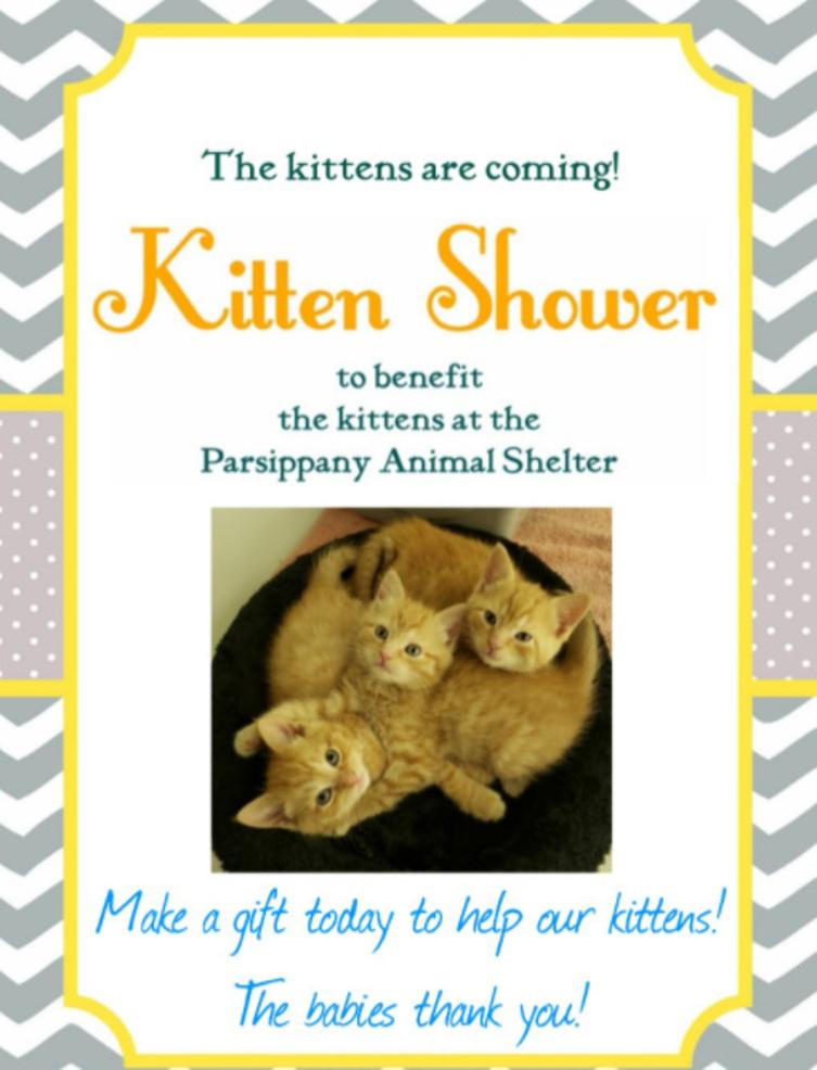 Best crop f8942300da95c42ba022 parsippany kittens