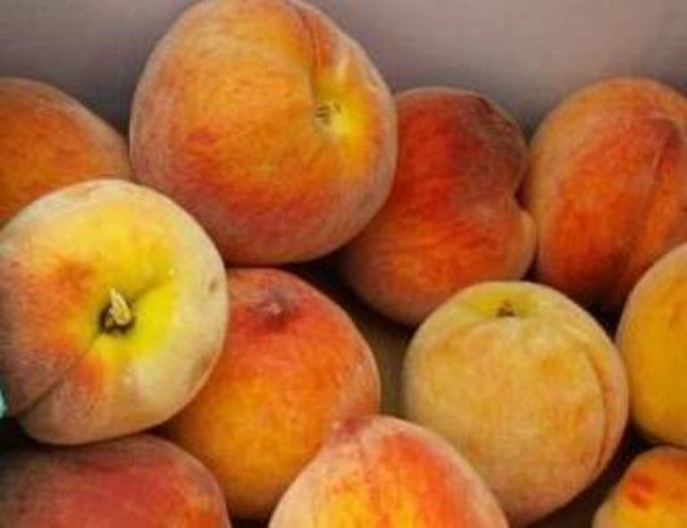 Pick a Peach! It's National Peach Month - TAPinto