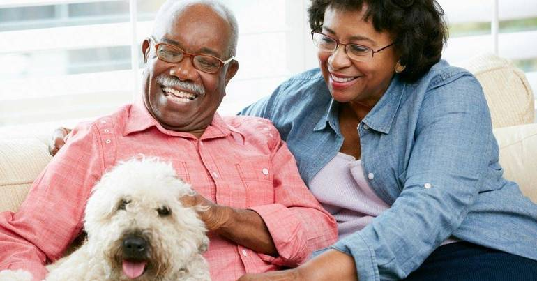 The Best Pets for Seniors: Find the Ideal Companion for You