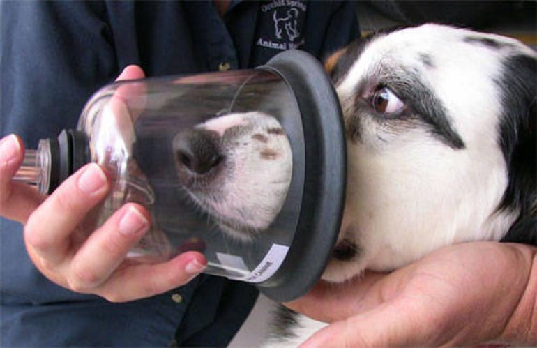 Pet-Oxygen-Masks.jpg