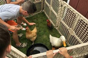 Traveling Petting Zoo Visits the Kenilworth Public Library