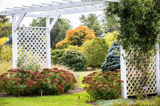 Top story caedbb731bdb97427d23 perennial garden white copy  1