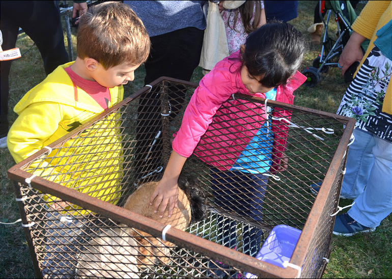 Scenes from the Scotch Plains Harvest Festival at the historic Frazee House.