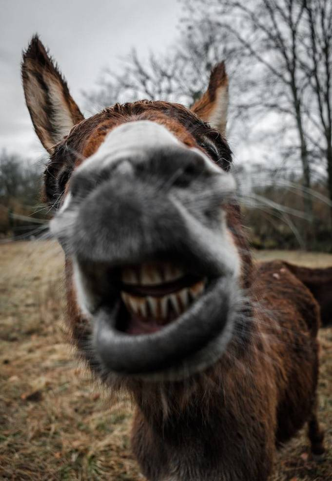 Gov. Murphy: To all the jackasses...we know who you are and will not relent