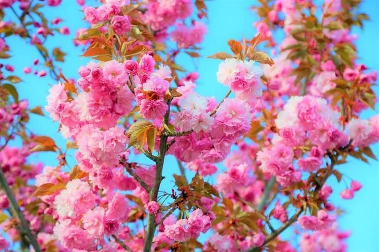Springtime on Red Bank 's Navesink River