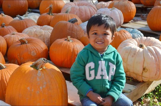 Top story 0affd023cd4947776b3e ph pumpkin boy