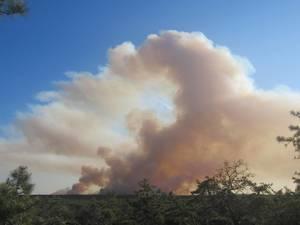 Carousel image de375f1a99ba7984e3fd pinelands brush fire