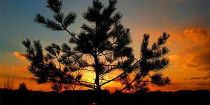 Carousel image e7a3bb0a94db1156151c pinelands sunset