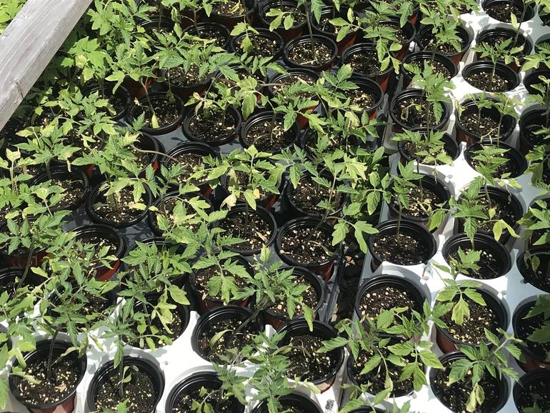 plant sale 3.jpg