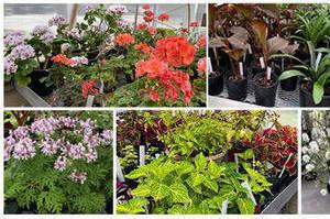 Annual Plant Sale at  Laurelwood Arboretum