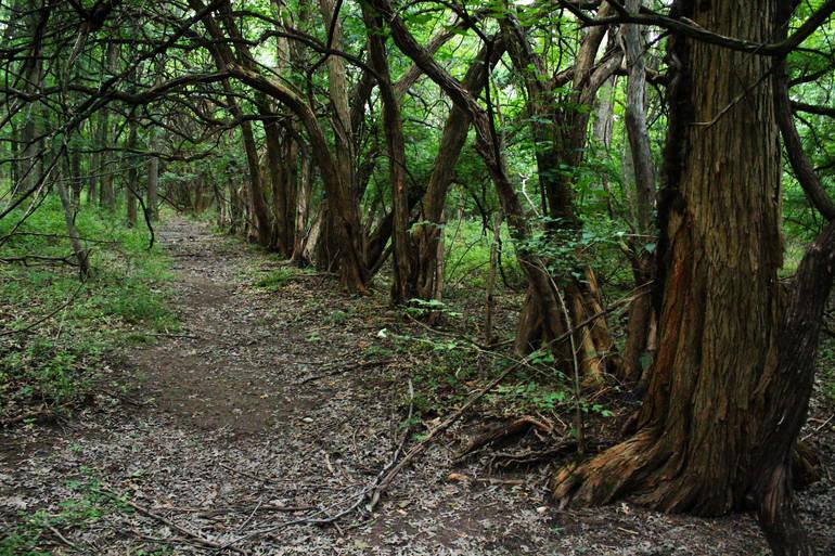 Popular walking pathway near Lawrence Brook.jpg