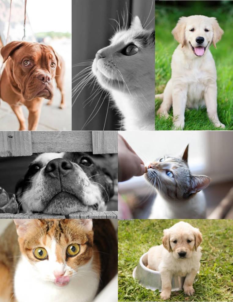 PRAAR Pets.jpg