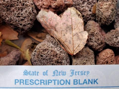 Top story 29154f3b8449db71bfef prescription blank