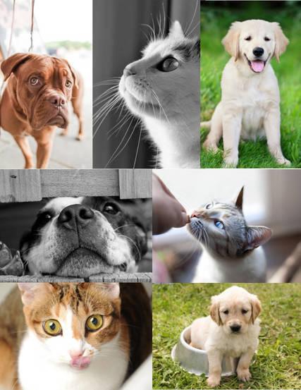 Top story a764a438099b27c14749 praar pets