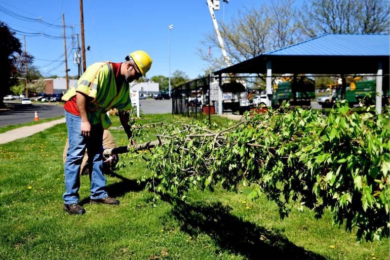 PSEG_TREE_4-24-19 tree union.jpg