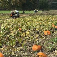 Carousel image 553ee7f6d8e917443648 pumpkin