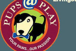 Carousel image 5dea5c46e73d24b2a503 pupsatplay logo header