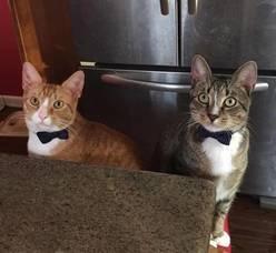 Boulevard Veterinary Clinic Pets of the Week: Quint & Hooper