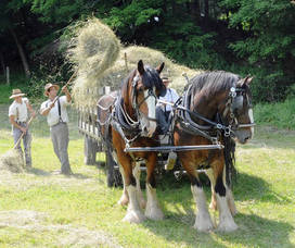 Carousel_image_4b61d546fe904434fef7_quiet_valley_clydesdales2