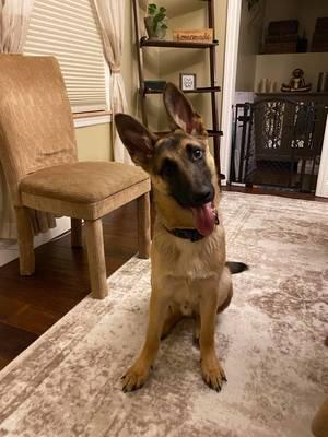 Boulevard Veterinary Clinic Pet of the Week: Rex