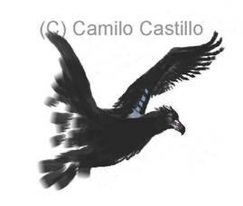 Carousel_image_0e962dd134eefeaf5f9b_raven