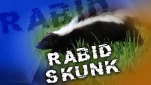 Carousel image b125cc56568c68be33fe rabid skunk