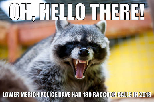 Top story fe1a66b120a608430f59 racoon crime meme