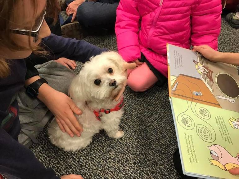 Read Aloud to Therapy Dogs-Brie2.JPG