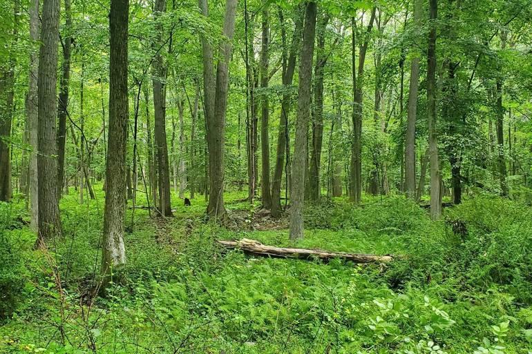 Roxbury Township, Morris County, NJ, Roxbury trail, Ledgewood
