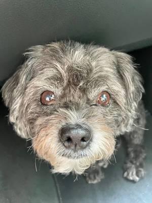 Boulevard Veterinary Clinic Pet of the Week: Sammie