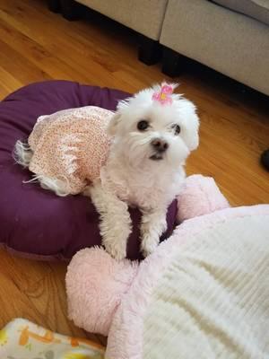 Boulevard Veterinary Clinic Pet of the Week: Sophie