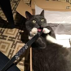Boulevard Veterinary Clinic Pet of the Week: Inspector Snoops