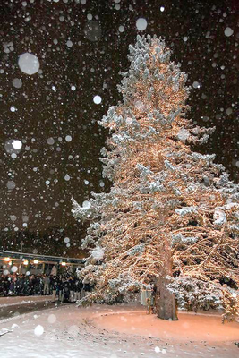 Carousel image f5f1b4ad8e46cd285510 saint joseph high school christmas tree lighting