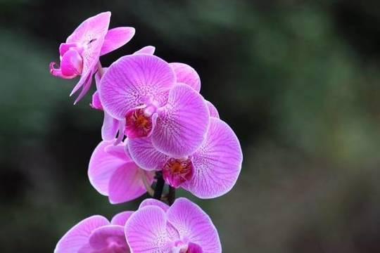 Top story af230df99c1f0d980e80 sara parmigiani pink orchid