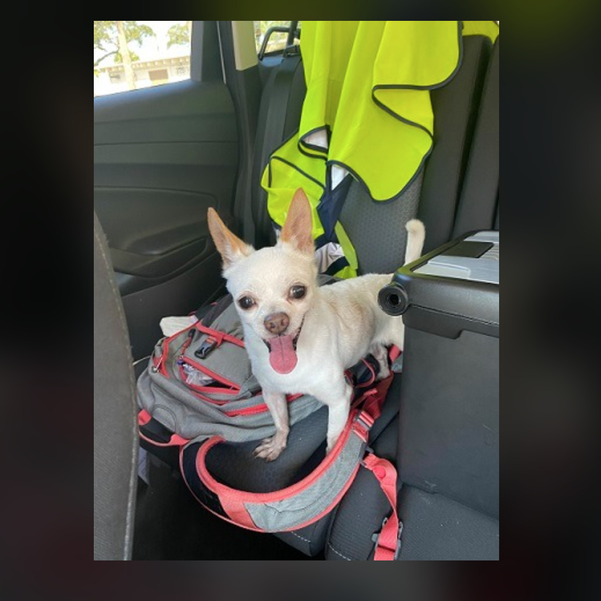 Dog Found On NW 38 Street in Coral Springs
