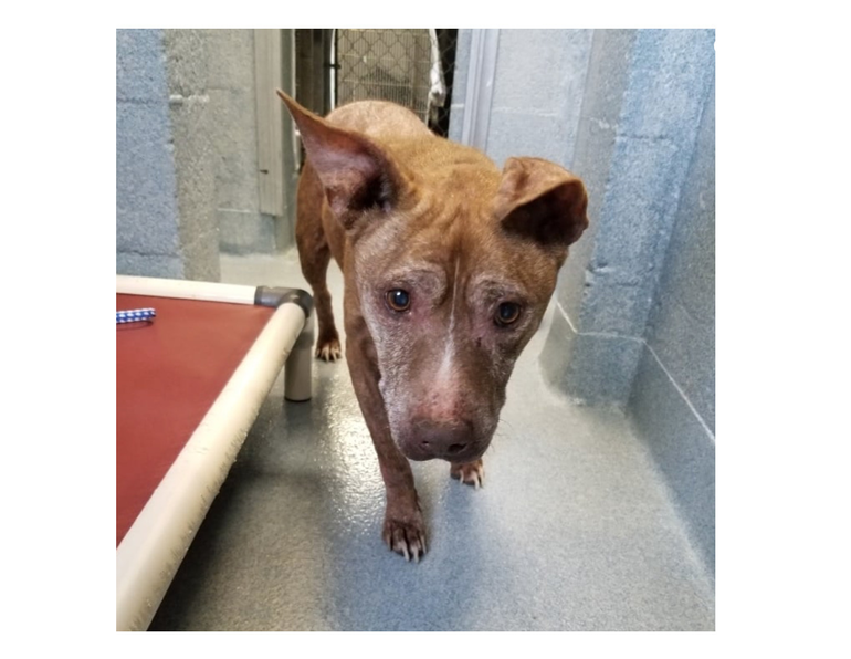 Dog found on Sample Road and Sawgrass Expressway in Coral Springs.