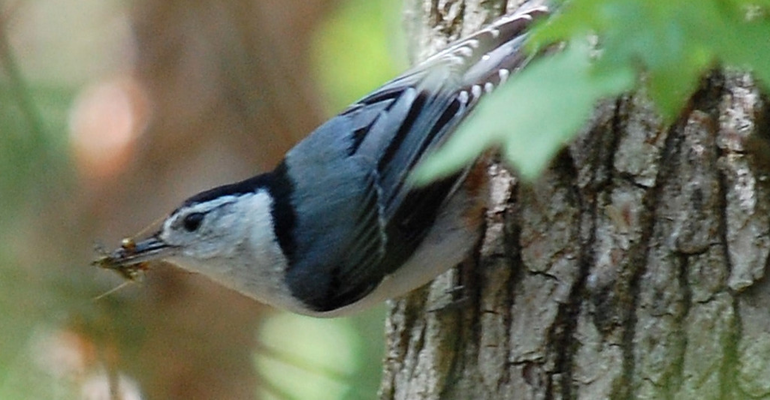 """East Brunswick Spring Birding Day""""  70 Species Spotted in the Township"""