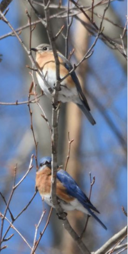 East Brunswick is for the Birds on May 1